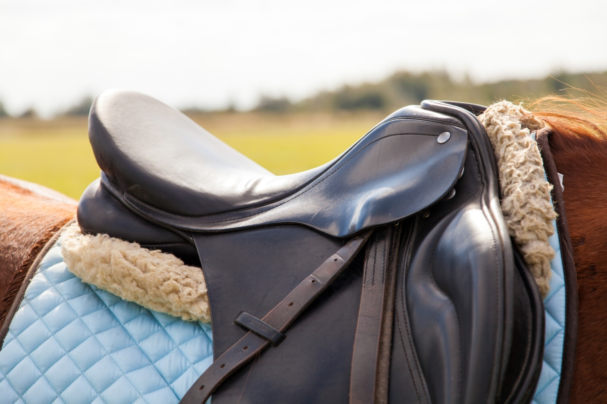 Equestrian Products Importation